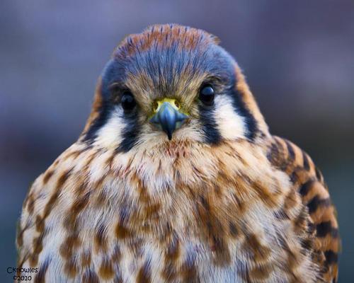 Beautiful Birds...