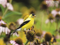 Birds and Blooms - flora-and-fauna wallpaper