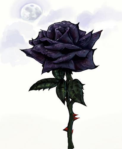 Black rosas wallpaper containing a bouquet titled Black Rose