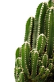 Cactus - green photo