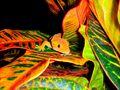 FLAME ORANGE FEMALE CRESTED GECKO IN A CROTON PLANT