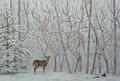 Deer  - illusions photo
