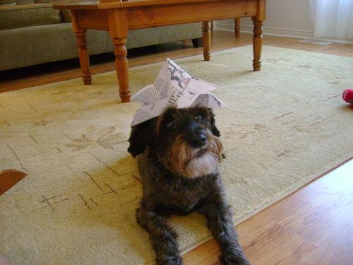 Hailey! My doggy!