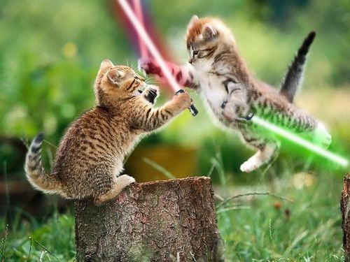 Jedi kitties!