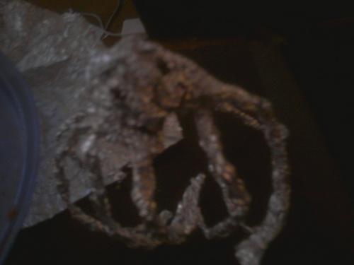 Meh epic spider. xD