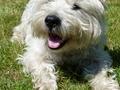 My dog Jimmy ♥