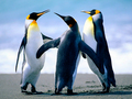Penguins? ADOOORBLE!!!