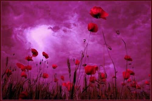 berwarna merah muda, merah muda Sky