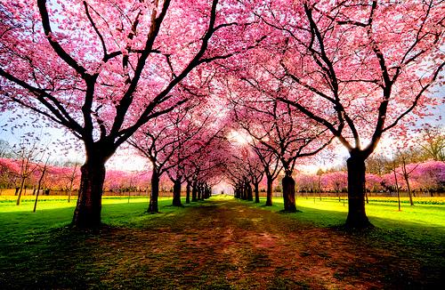 ピンク Trees