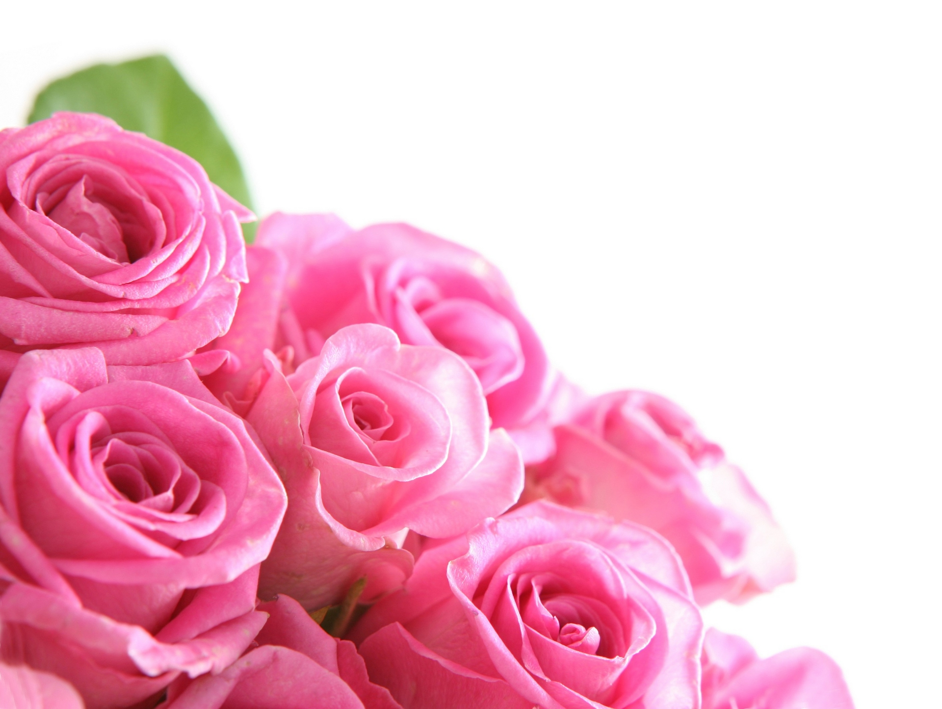 Pink Color Images Roses Hd Wallpaper And Background Photos