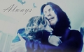 Severus and Lily- Always - severus-snape wallpaper