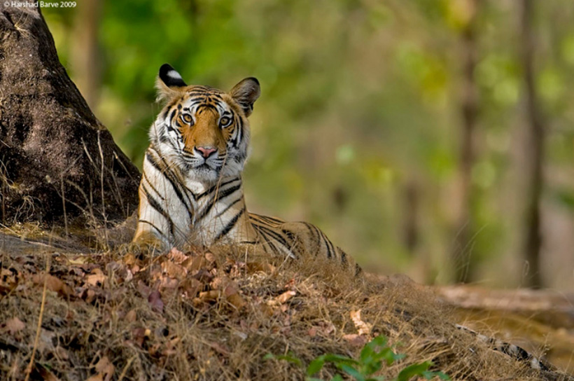 Wild Nature Images beautiful nature Photo