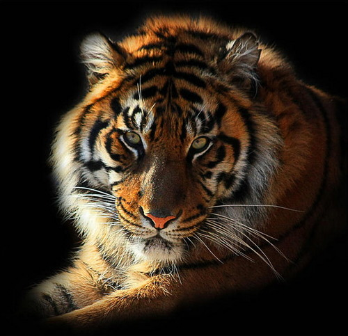 Wild & Beautiful...