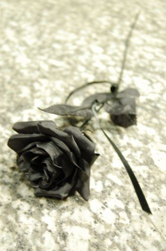 Black 장미 바탕화면 titled black rose