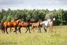 caballos on Taylor's Uncle's farm