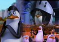 king cute, kowalski yeah - penguins-of-madagascar fan art