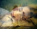 Butterfly Dreaming <3