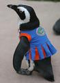African Penguin Wearing A Dress