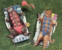 Cute and Fat catz