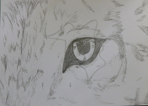 Eye of a serigala, wolf