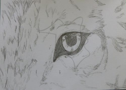 Eye of a بھیڑیا