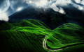 natural-views - Green is the best color wallpaper