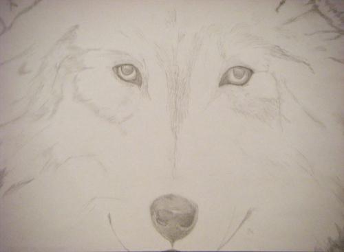 Lone serigala