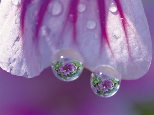 Purple 바탕화면 titled Water drops