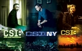 csi leaders - csi-ny wallpaper