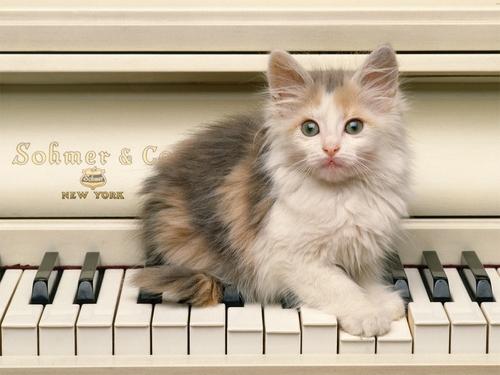 Creative Kitty