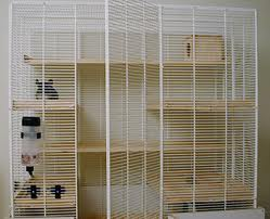 Big Chinchilla cage