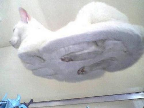 Cat Seen From Below