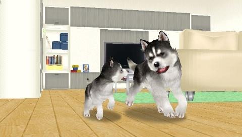 Husky&Baby