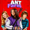 New Banner & Icon! - ant-farm photo