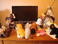 SOME of our Webkinz - webkinz photo