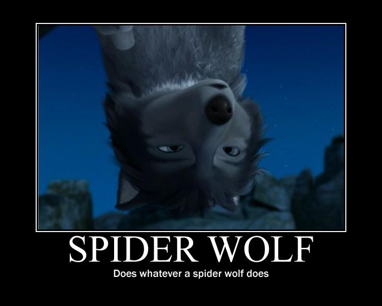 con nhện, nhện chó sói, sói