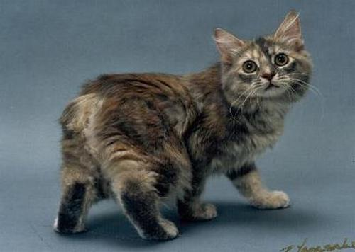 The 9 Weirdest Looking Cat Breeds