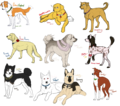 The Axis and Allies as dogs - hetalia photo