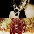 Twilight♥TVD