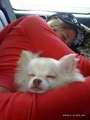kelly kelly and her dog - kelly-kelly photo