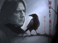 Half-blood Prince - severus-snape wallpaper
