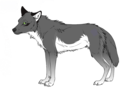 Katelover812 as a wolf - black-and-red-wolf-pack photo