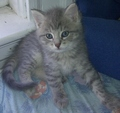 Sebastion - cute-kittens photo