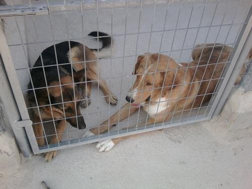 My perros