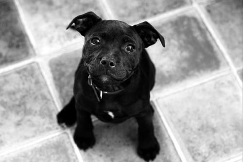 Anak Anjing