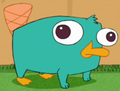 Baby Perry - perry-the-platypus photo