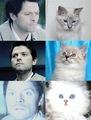 Castiel like a Cat