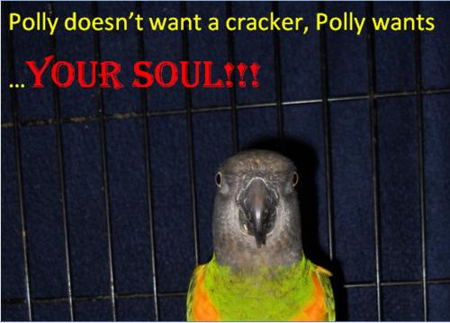 Evil попугай