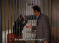 Kramer & the Monkey