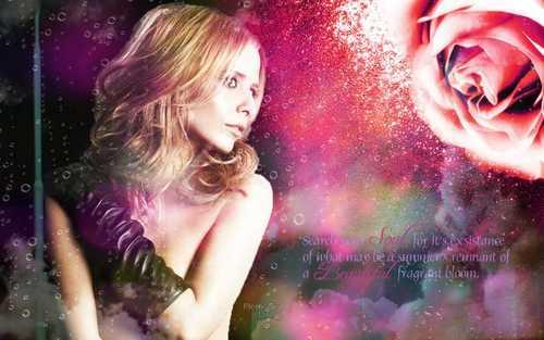 Sara Michelle Gellar -Buffy kertas dinding